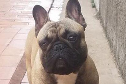 Todos quieren que vuelva Putin; este perro robado