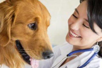 El vídeo viral que muestra cómo tratan los veterinarios a nuestras mascotas