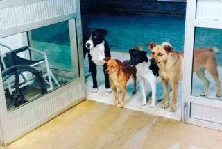 Los 4 perros esperaron a las puertas del hospital a que su dueño fuera atendido en urgencias