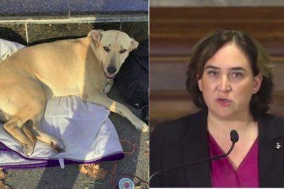 Las malas pulgas de Ada Colau por este nuevo vídeo de la perra 'Sota' abatida a tiros por un guardia urbano