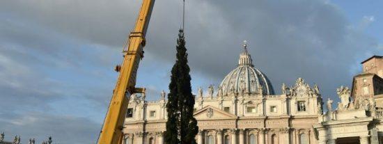 """El Papa pide """"no mundanizar la Navidad"""": no nace un árbol, sino Jesús"""