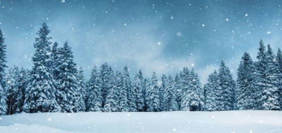 Arboles de Navidad modernos y originales,