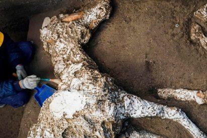 Hallan este caballo petrificado bien conservado en un establo de Pompeya