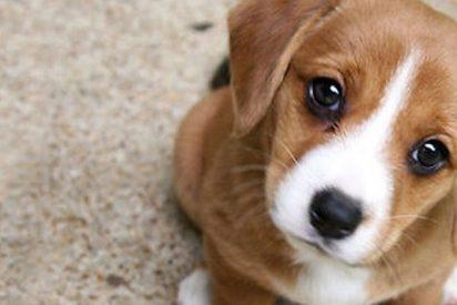 Así reacciona tu cerebro cuando ves a un cachorrito