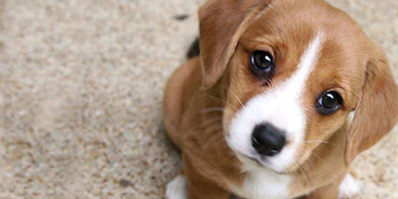 Reino Unido prohibe la venta de perros y gatos cachorros en tiendas