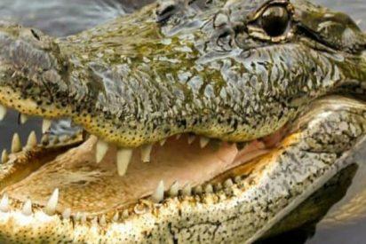 Este cocodrilo ataca ferozmente a un anciano