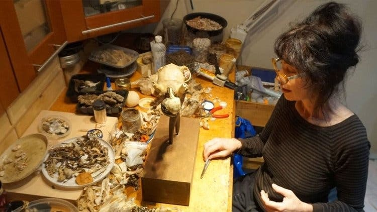 Esculturas asesinas: Las obras realizadas con mejillones estaban matando lentamente a su creadora