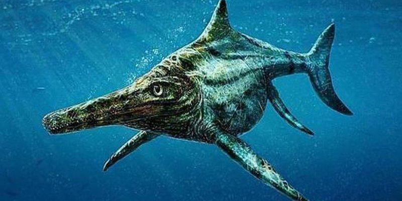 Así era el ictiosaurio: parecido a los delfines pero emparentado con las tortugas