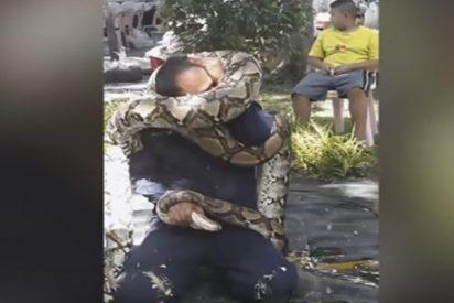 Esta enorme pitón estrangula a un bombero durante una demostración de seguridad