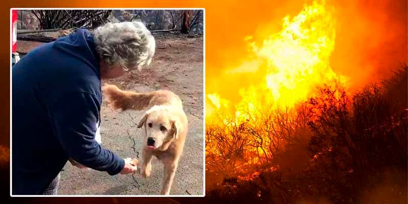 Este perro abandonado espera a sus dueños durante un mes en una casa quemada