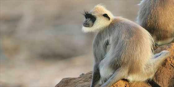 Seis vietnamitas se comieron un mono, bebieron su sangre y lo transmitieron en Facebook