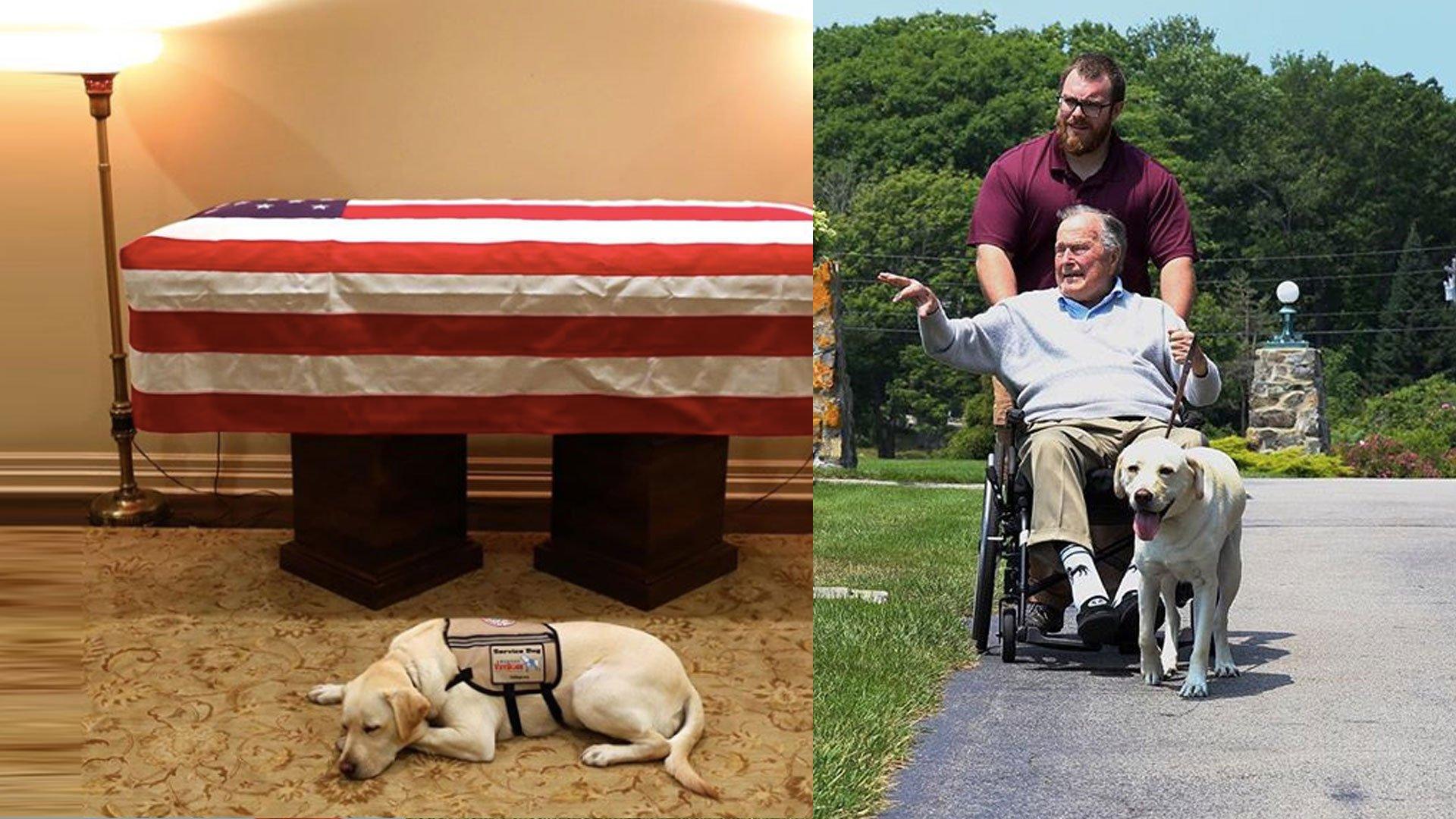 La conmovedora despedida del perro del expresidente George H.W. Bush ante su ataud
