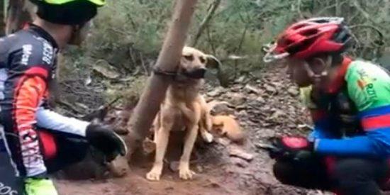 Dejaron al perro atado a un árbol para que muriera de hambre y sed en medio del bosque