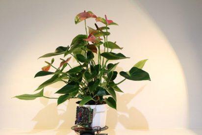 Así es la planta-robot capaz de desplazarse en busca de luz