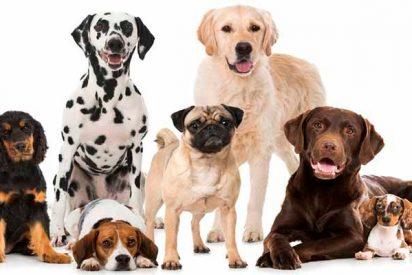 Con esta guía sabrás todo lo que necesitas sobre las diferentes razas de perros