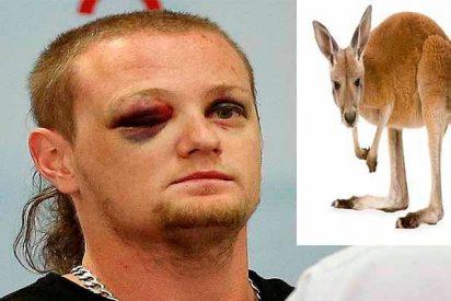 Cinco meses de de cárcel para un australiano por apuñalar 20 veces a un canguro