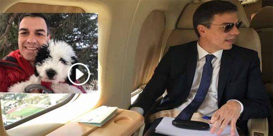 El socialista Pedro Sánchez convierte a su perra en pasajero de lujo en el 'Falcon' oficial