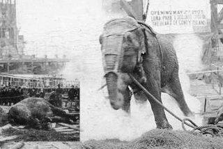 La aterradora historia de 'Topsy', la elefanta que Edison y Tesla electrocutaron en una disputa científica