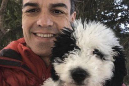 'Turca' salta a la fama: las redes se parten la caja a cuenta de la perra del socialista Sánchez