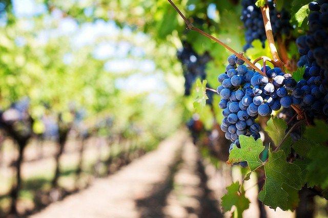 Cerca de 300 bodegas de Rioja claman contra la norma de la Interprofesional de España