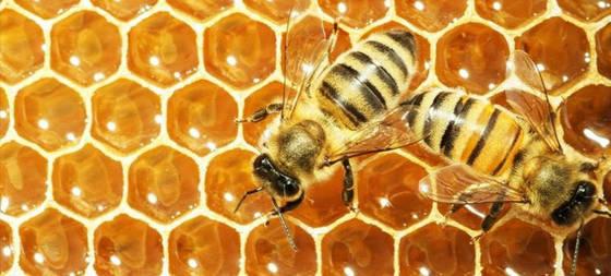 Azúcar o miel cuál engorda menos