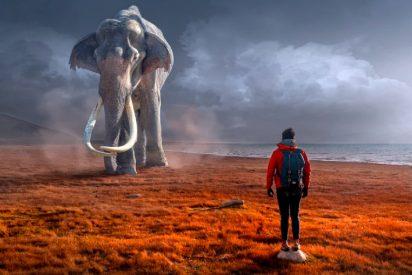 El elefante mata al guía turístico que intentaba hipnotizarlo