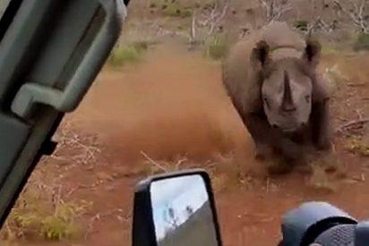 Cuando al rinoceronte se le hinchan los 'melones', de poco sirve tomar precauciones