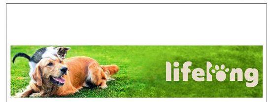 Lifelong pienso mascotas Amazon