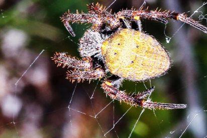 Graban esta escalofriante 'lluvia de arañas' en Brasil