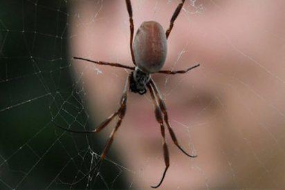 Mata a una araña con un dardo y lo acusan de maltrato animal