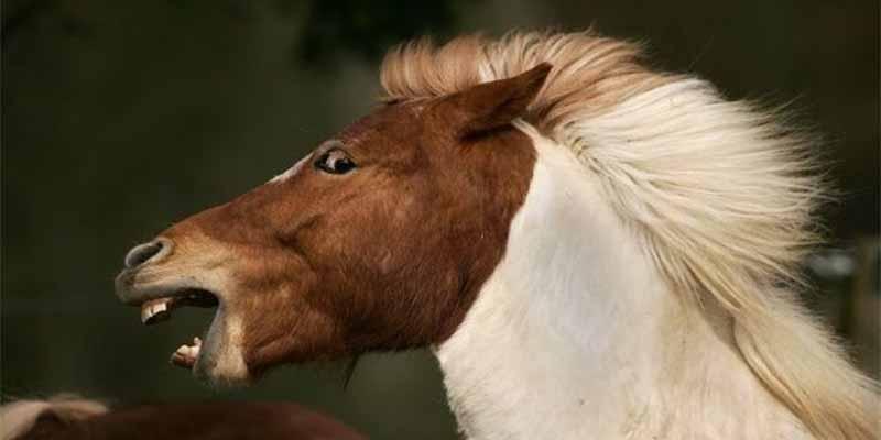 Unos desalmados matan a golpes a 4 caballos y torturan a otros cinco en un túnel