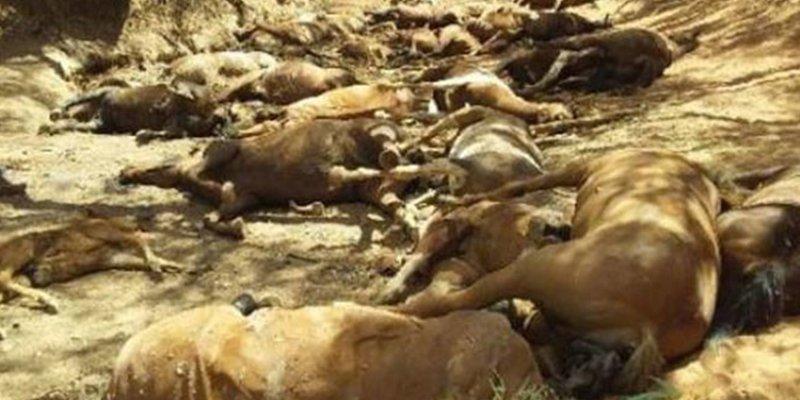 La ola de calor en Australia mata a decenas de caballos