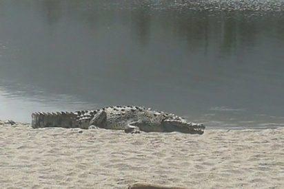 Un caimán de dos metros aparece en el parque Tayrona de Colombia