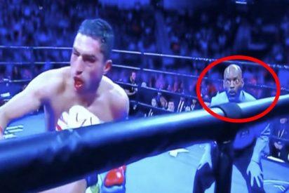 Los caretos de este árbitro durante un combate de boxeo lo petan en las redes