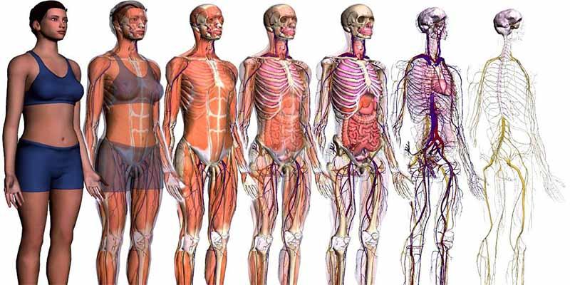 9 partes del cuerpo que ya no necesitamos para nada