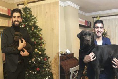 Esta foto de un perro y su dueño demuestra lo rápido que pasa un año