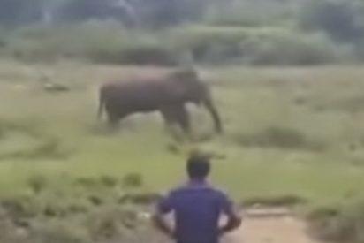 Este elefante salvaje mata al guía turístico que intentaba hipnotizarlo