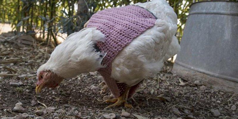 Así es Veganópolis; el lugar donde las gallinas llevan jersey
