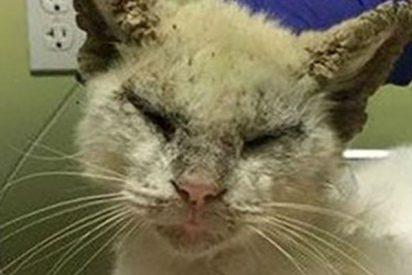 Este gato ciego abre los ojos de nuevo y cautiva a las redes por su belleza
