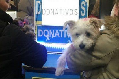 Los animales toman el centro de Madrid por San Antón