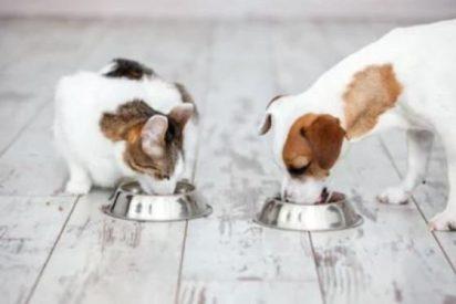 Lifelong: la marca de alimentación para mascotas de Amazon