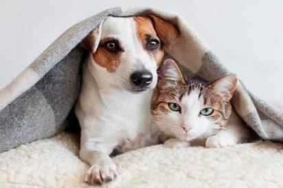 Perros y gatos: El tétrico y miserable destino de las mascotas en la Venezuela chavista