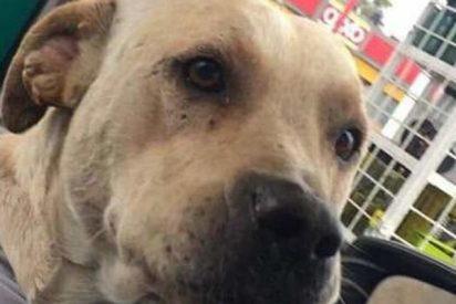 Este perro callejero le devuelve el favor al dueño de una gasolinera que lo adoptó
