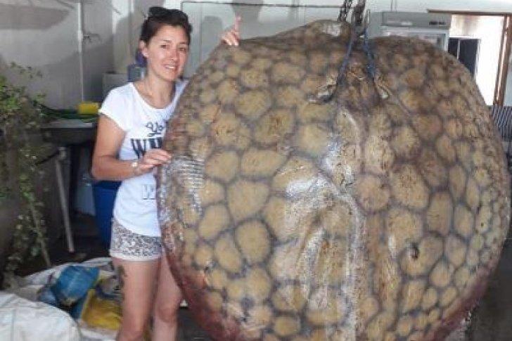 Escalofriante hallazgo: Sacó del mar a una mantarraya de 140 kilos
