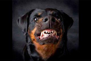 'Operación Rottweiler': Los polis perseguían a unos ladrones peligrosos y le pegaron 4 tiros al perro