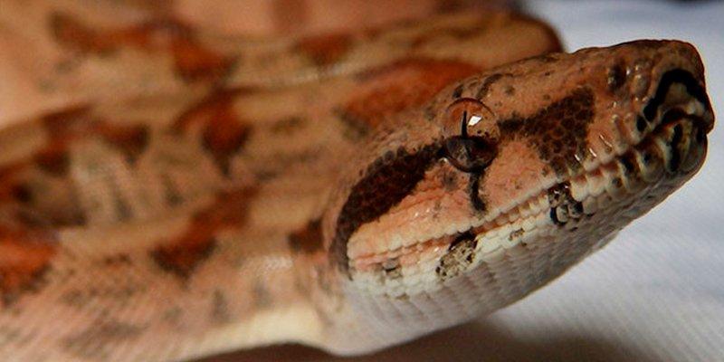 Fotos: Una serpiente atrincherada en un inodoro muerde en el culo a una mujer