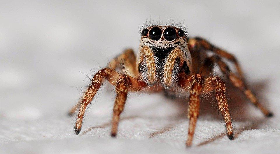 Trata de matar a una araña y provoca un operativo policial