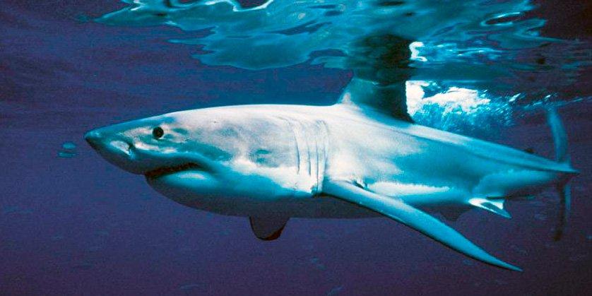 Un tiburón se ceba con una anciana y una niña en Queensland