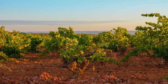 """Ruta del Vino Cariñena """"La Ruta del Vino de las Piedras"""""""