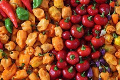MEATLESS MONDAY: 3 recetas rápidas e increíbles para un lunes sin carne